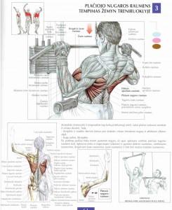Nugaros plačiojo raumens tempimas